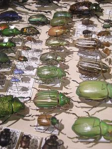 "This bug collection will make a lot more sense after you read ""Archived."" (Image from Wiki Commons.)"